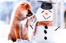 Зимние Веселые Собачьи Старты