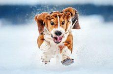 Весенние Веселые Собачьи Старты